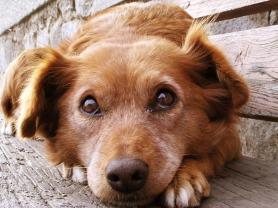 dog-how-to-select-your-new-best-friend-thinkstock99062463