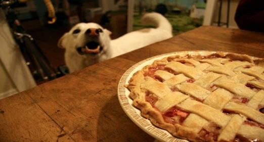 dog-pie