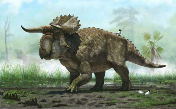 15684276_nasutuceratops_titusi_by_olorotitan-d47ys2p