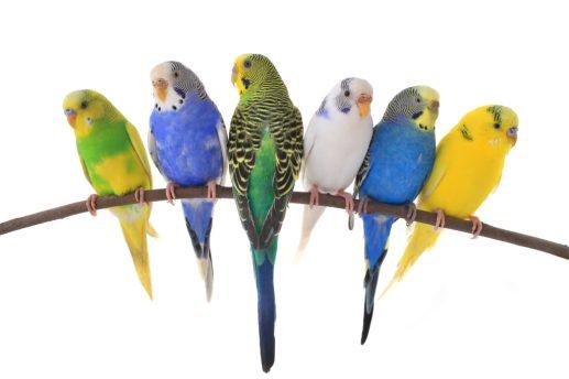 συντροφιά-για-παπαγαλάκια-1024x683